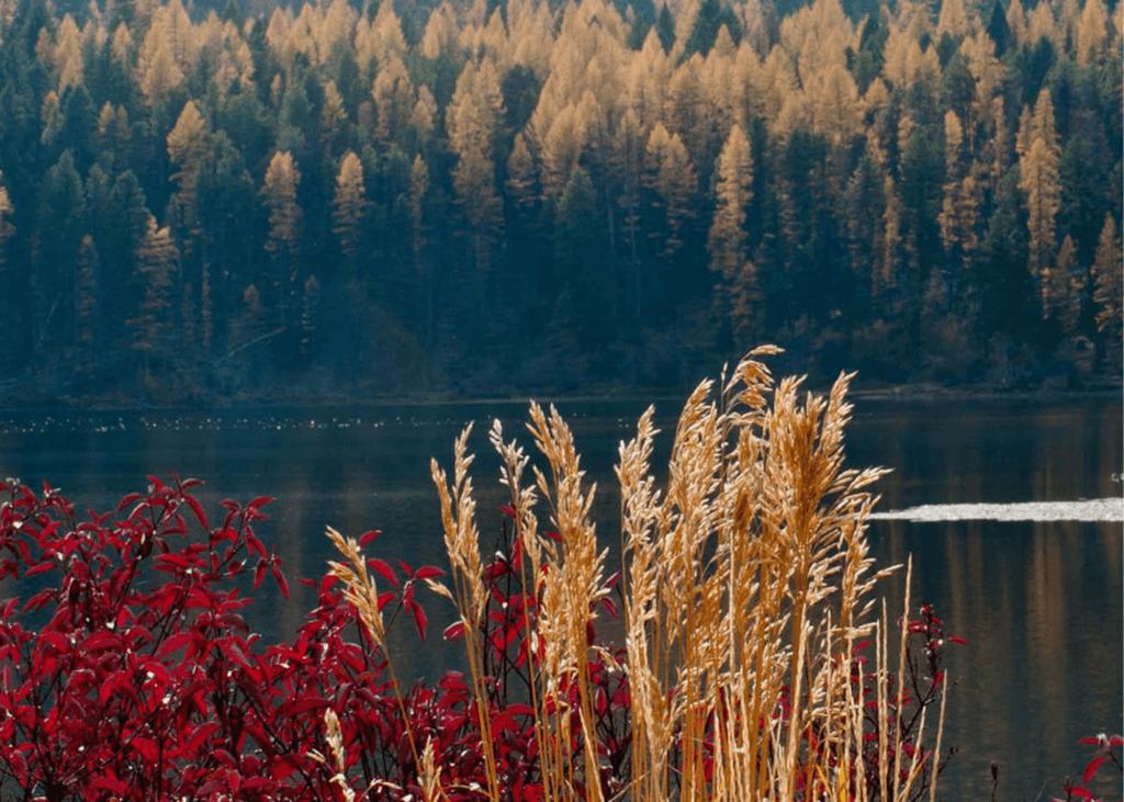 Salmon-Lake-State-Park